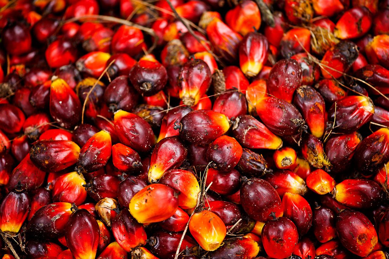 Les 5 bienfaits de l'huile de palme